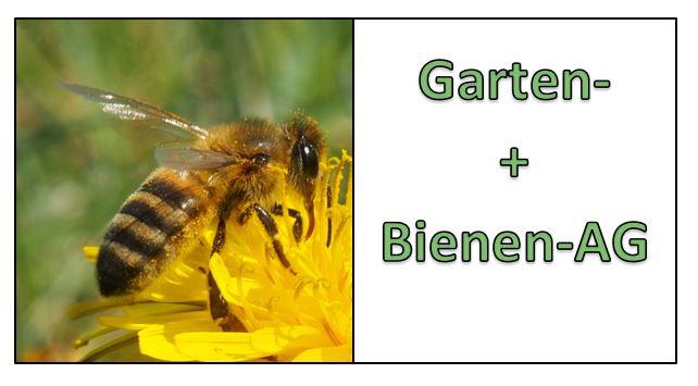 Bild einer Blüte mit einer Biene